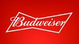 Budweiser Amber Lager beer