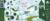 Mini graft i cloud city i emerald city 1