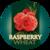 Mini wasatch raspberry wheat