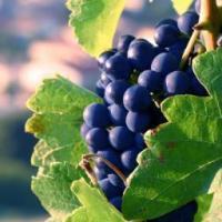 Pacific Rim Wines